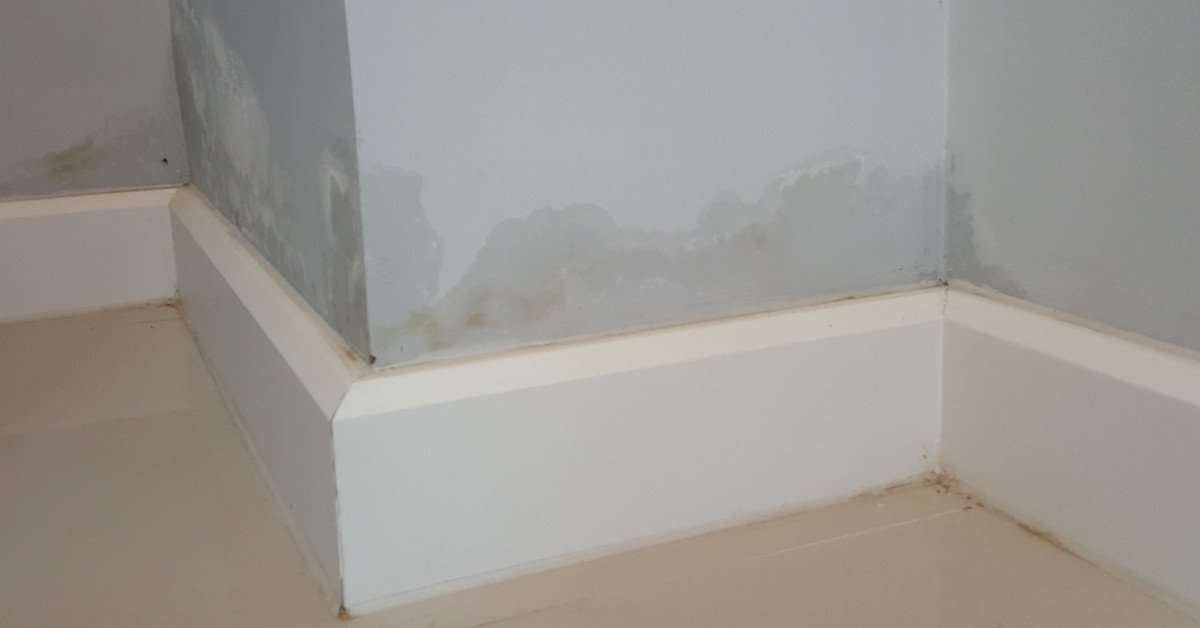 What can you do about damp problems in rented property